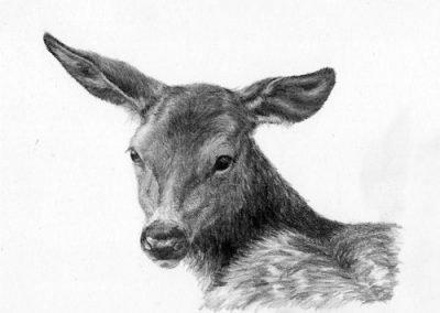 113357-deer