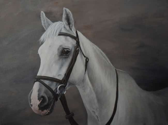 sports pony painting by Kathrin Guenther, acrylic painting, equine art