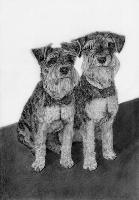 pet portrait artist in county cork