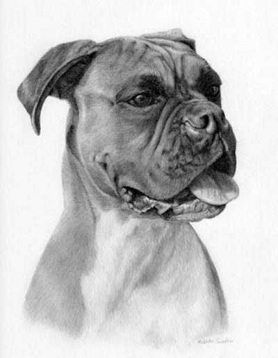 Sash, boxer bitch, dog, graphite, drawing, Kathrin Guenther, pet portrait
