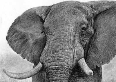 elephant graphite drawing Kathrin Guenther web file