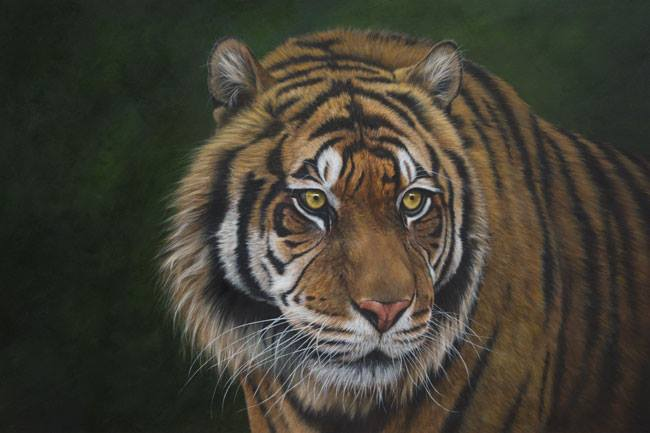 Sumatran Tiger painting by Kathrin Guenther, big cats, cats, tiger, art, Custom made pet portraits, equine and wildlife art by Kathrin Guenther