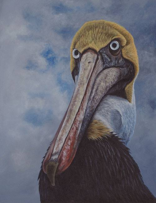 Brown pelican painting by Kathrin Guenther, acrylic painting, wildlife art
