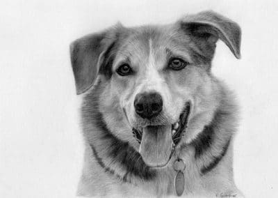 German Shepherd drawing, memorial portrait by Kathrin Guenther, memorial portrait