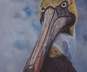 Attitude, a brown pelican